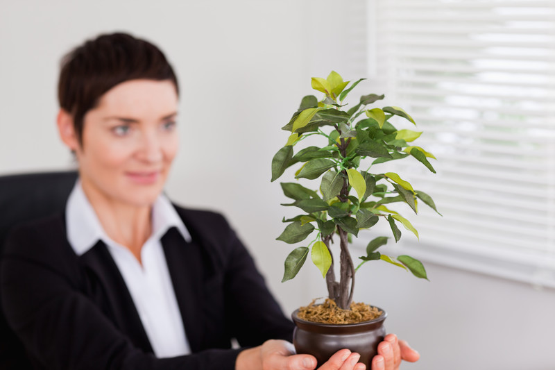 plants for office space. unique office virtual office greenery choosing the best plants for your space on for e